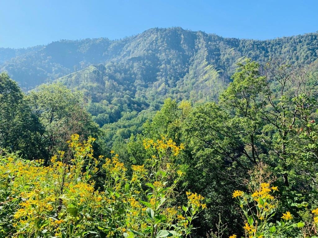 Views of the Smoky Mountains. Wild flowers and green mountainsides.