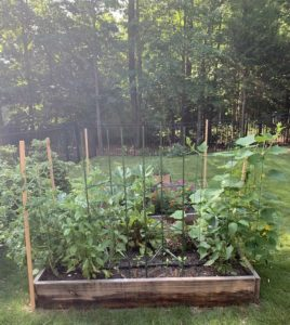 Garden growing like crazy. Tall tomatoes, peppers, cucumbers, and purple and orange flowers sprinkled throughout.